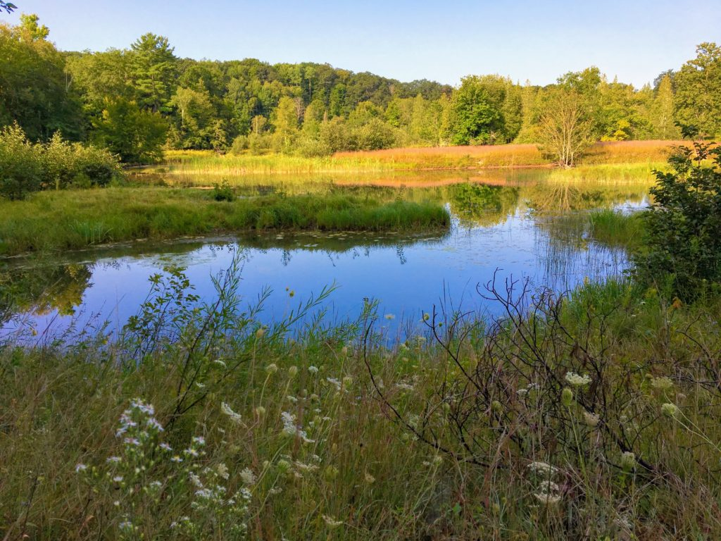 An Inlet of the Manistee River - Manistee River Trail