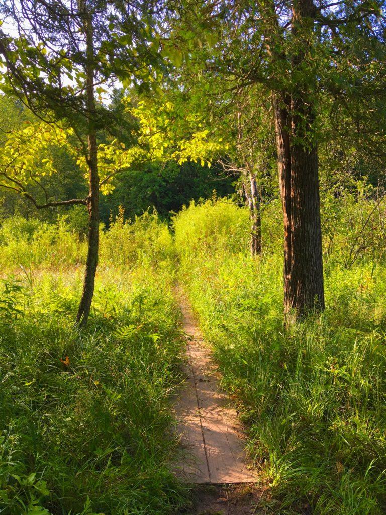 Boardwalk Through Marshy Area - Manistee River Trail