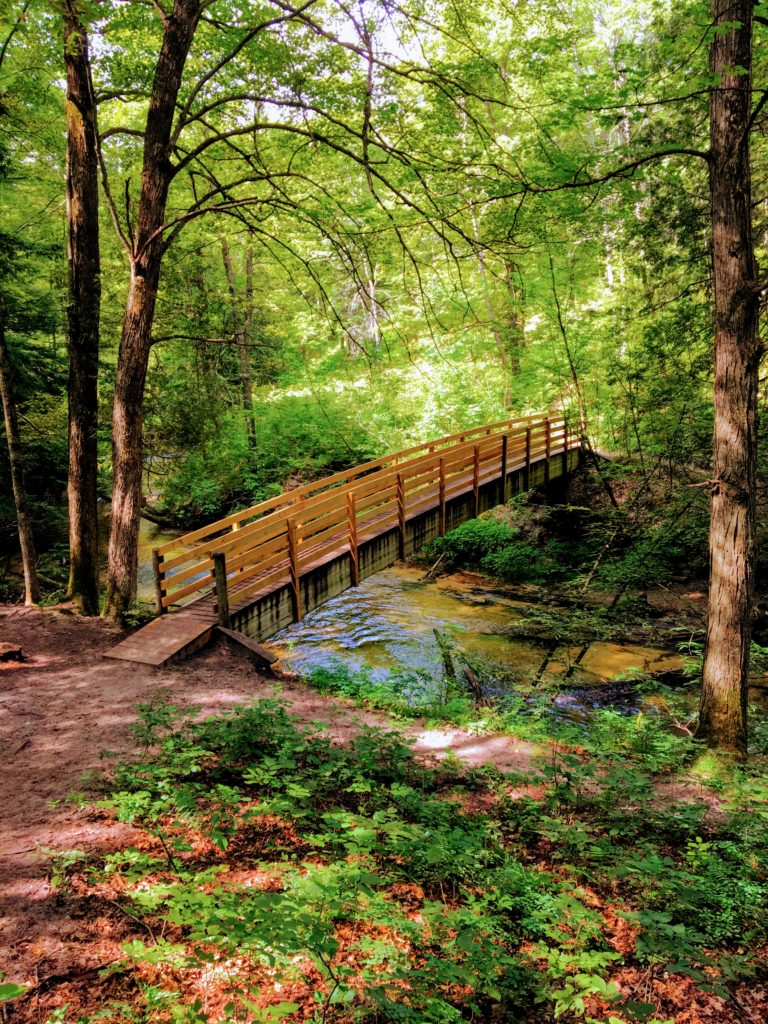 One of Many Bridges - Manistee River Trail