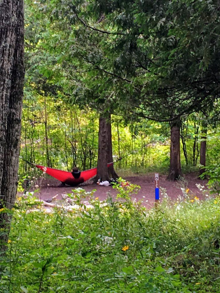 Campsite 1C - Manistee River Trail
