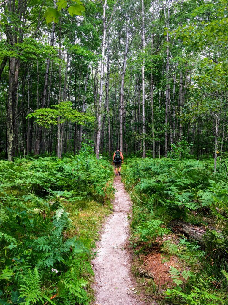 Path Near Campsite 1C - Manistee River Trail
