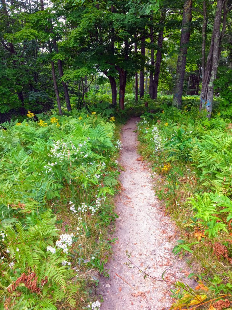 Path Near Campsite 1A - Manistee River Trail