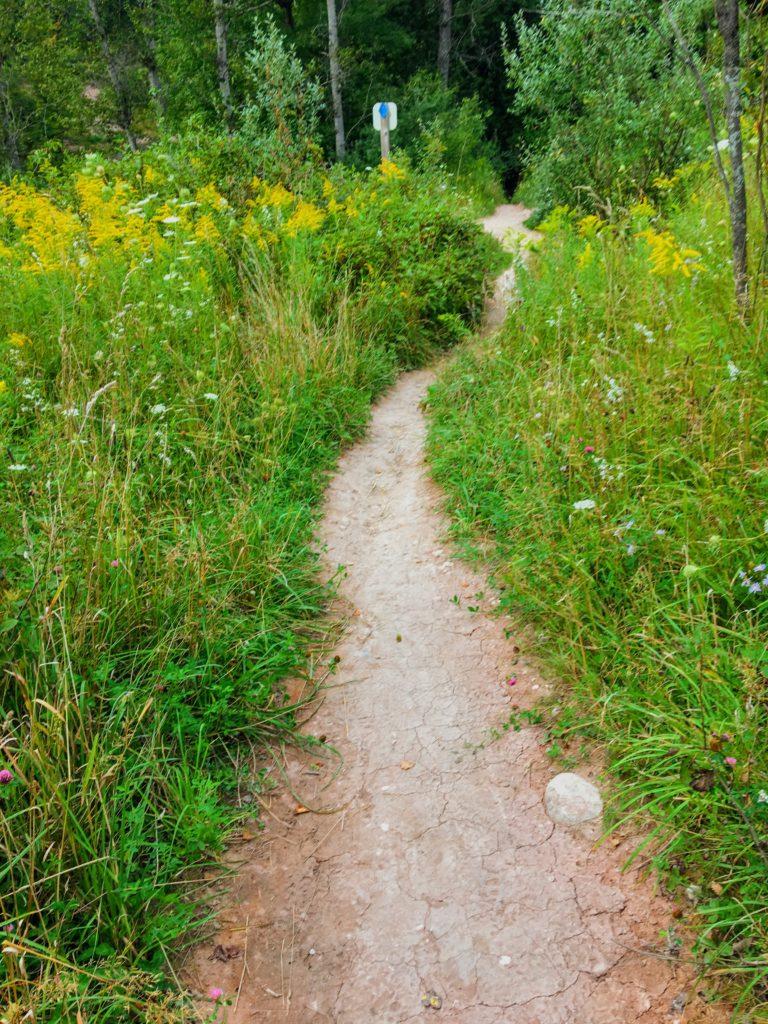 Path Near Campsite 1B & the Suspension Bridge - Manistee River Trail