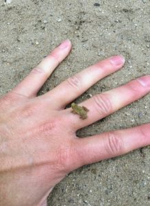 Tiny Frog - Manistee River Trail