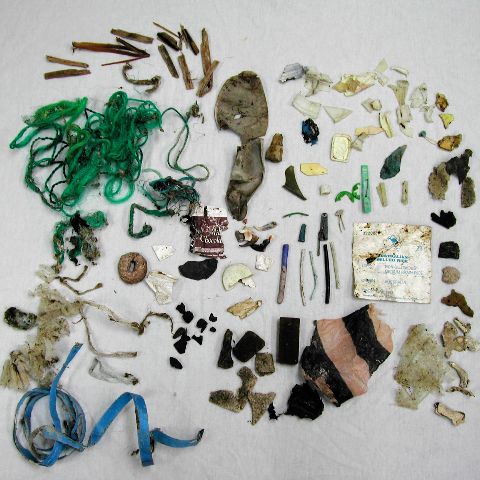 Assortment of fishing line, plastic trash, bones and shells removed from sea turtle's intestines