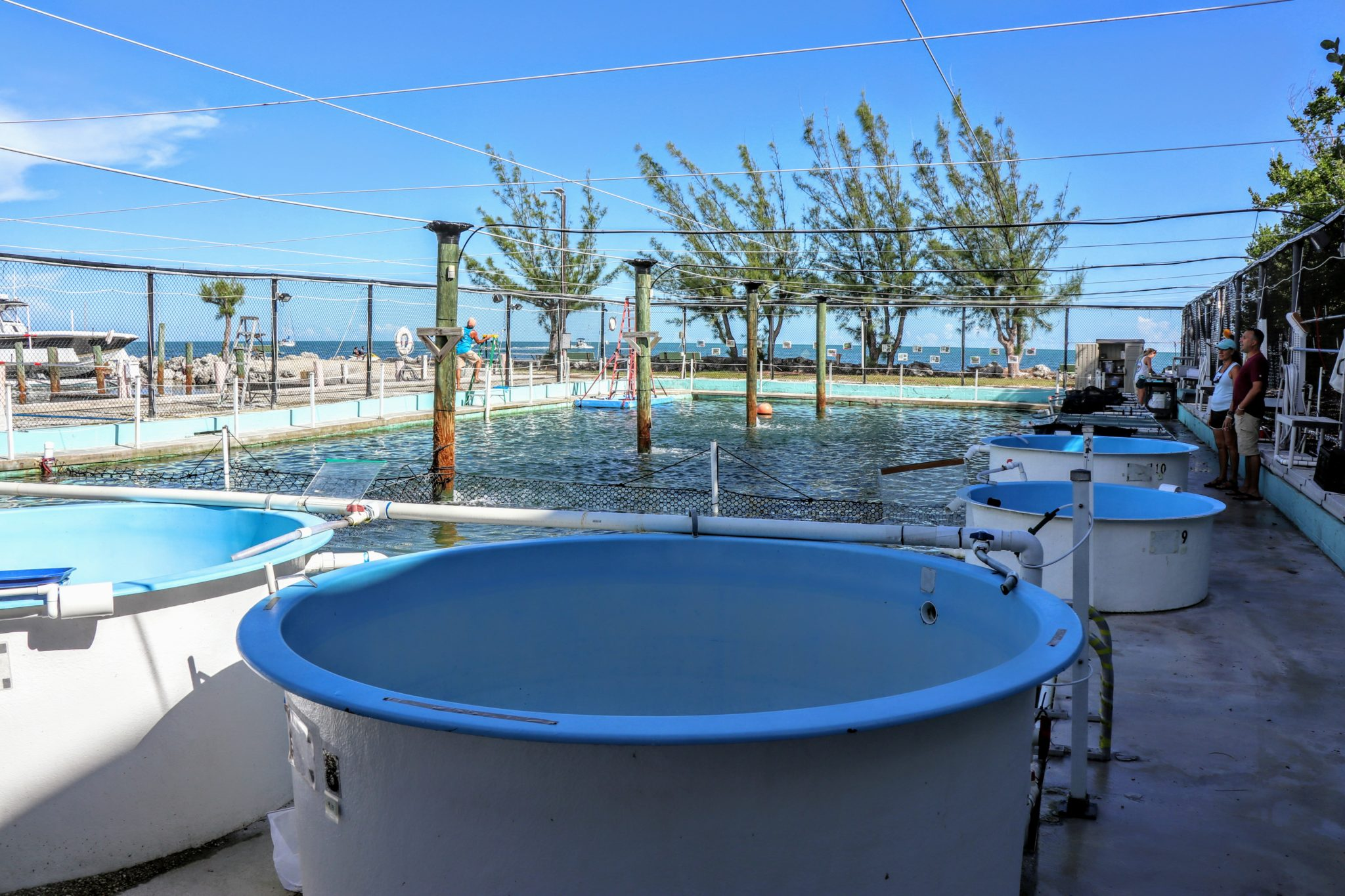 100,000 gallon salt water pool and individual sea turtle treatment tanks at the Turtle Hospital