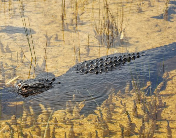 Everglades National Park One Day Itinerary