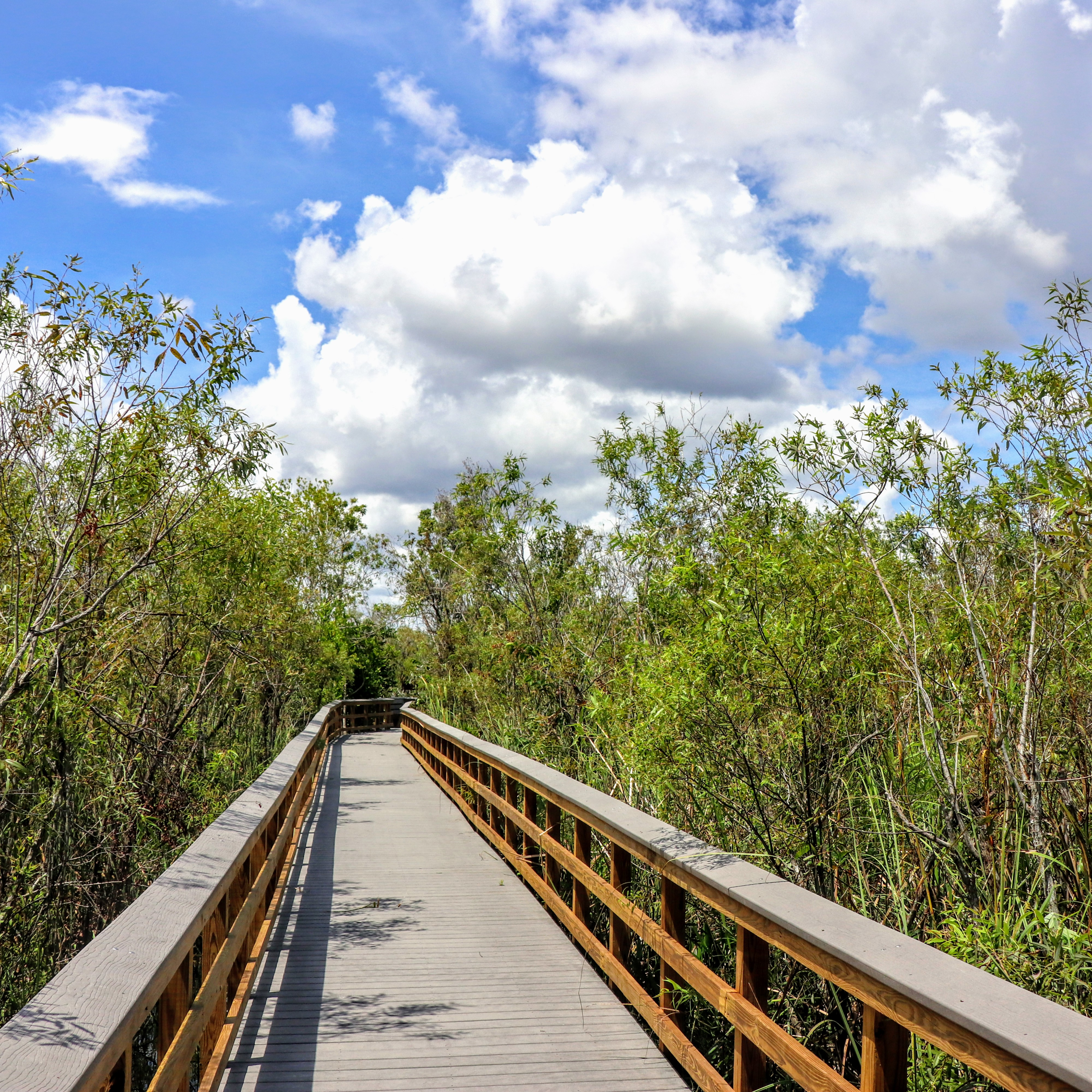 Bobcat Boardwalk in Shark Valley Everglades National Park